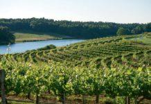 top 4 area wineries